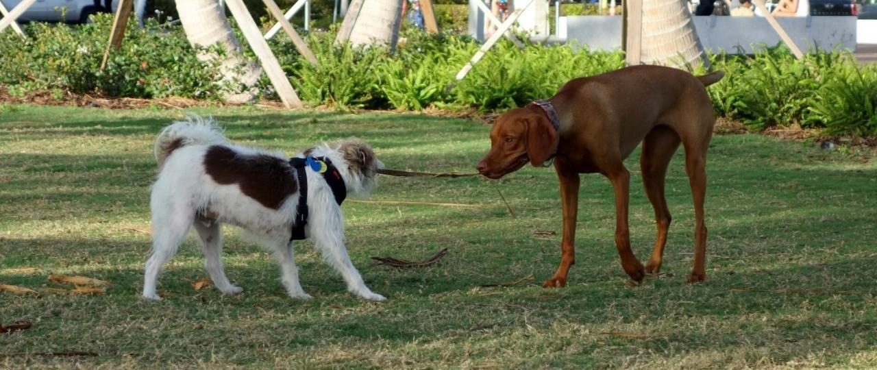 Pet Friendly Condos in Miami Beach