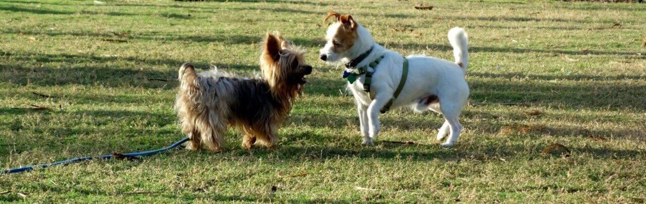 dog friendly beaches miami